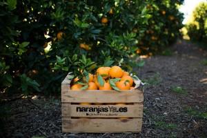 NaranjasYa-10-xic-2
